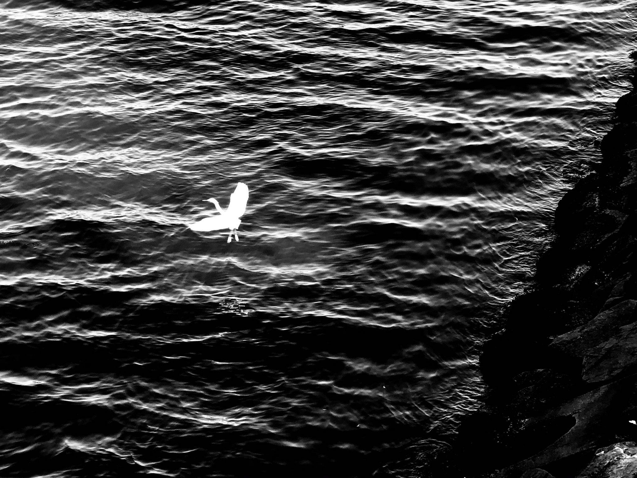 32. stork silhouette in reverse