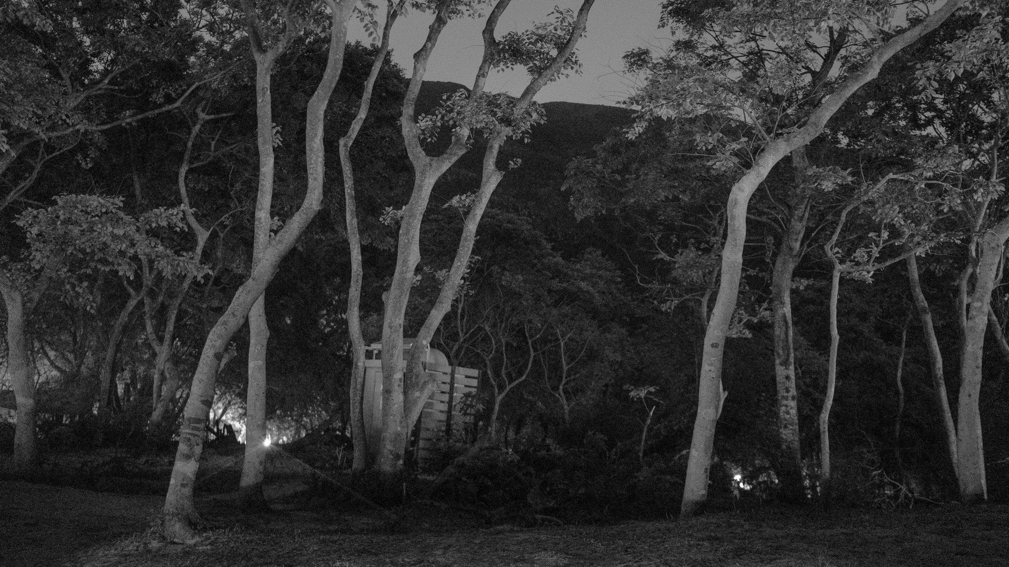 36. Hunting in the Dark